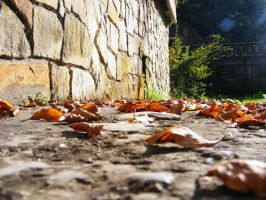 Leaves in the sun by la-vache-volante