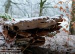 Small tree mushrooms hiding under a big one by TheFunnySpider