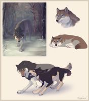 Wolves by Tazihound
