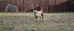 I've got the Ball! by Nalusa