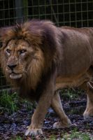 King by 904PhotoPhactory