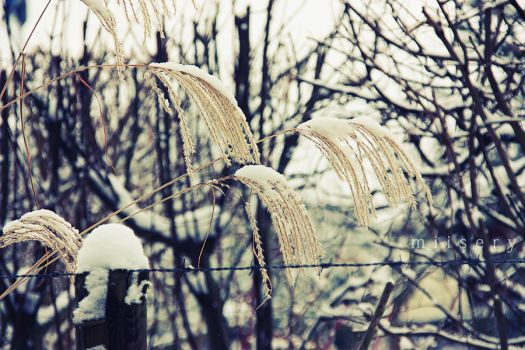 Winter came.. by miisery