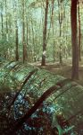 Forest Reflections by Kaz-D