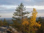 Colors of fall by Turbopuusti