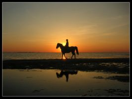 Horse and sunset by emeliten