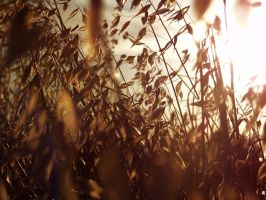 Summer Crops 13 -untouched- by IoannisCleary