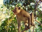 A Monkey of Angkor by PretendtoBelieve