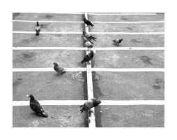 Pigeons and Lines by luiscds