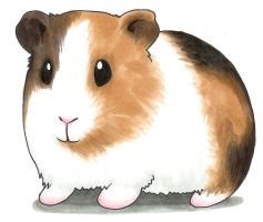 Guinea pig by Channy-chan