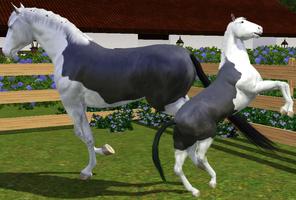 Sims 3 Horse Marking Download: SplashWhite2 by Isolated-Design