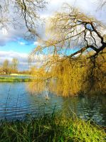 The Willow Tree by GraceDoragon