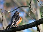 Ruffled Feathers by Daemare