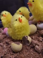 Easter Chicks by MegWhiteIII