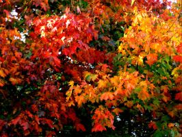 Autum Leaves by Teakster
