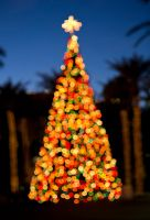 Tempe Bokeh Christmas Tree by Hatch1921
