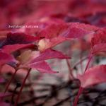 Autumn Leaves by 3wyl