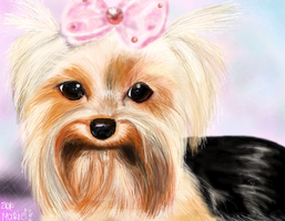 Yorkshire terrier by marielart