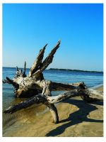 Driftwood Beach9 by sees2moons