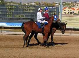 Racehorse Stock 34 by Rejects-Stock