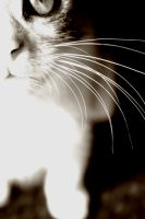 whiskers. by yesilm