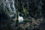 The Forest Unknow by morgu3