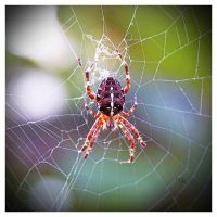 The NOT So Itsy-Bitsy Spider by TeaPhotography