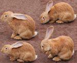 Little Rabbit Stock by Isalovesphotography