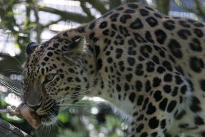Leopard 2 by Arctictouch