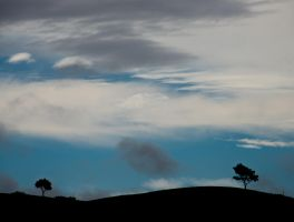 A Tree and Sky obsession. by lomatic