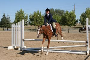 chestnut welsh pony cross hunter jumper by HorseStockPhotos