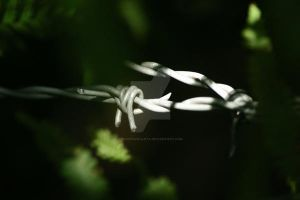 The barbed wire by SiostraWaleta