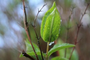 Raindrops On A Plant by theharshjudge