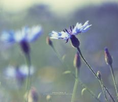 blue sunshine by Paulinaz
