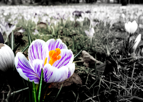 Spring's coming by Yangsl