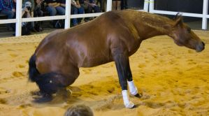 STOCK - 2014 Total Equine Expo-11 by fillyrox