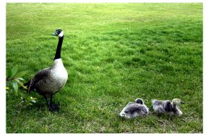 Mothers love there babys by blackbelly