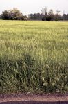 focus_on_fields by simo2409