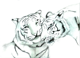 Bengal Tigers by Slifer