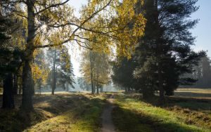 AUTUMN Pavlovsk 1 by Henrikson