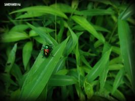 Project 365, Day 122: Shiny Beetle by sandyandi146