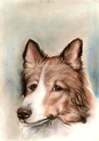 Let it be Sheltie by clotus