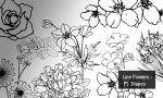Line Flowers - PS Shapes by screentones
