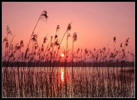 Shining Through by gordonrae
