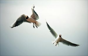 Birds In Flight by kailay