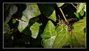 Wasp by jennystokes