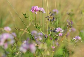 Fields of Clover 2 by Aylanna