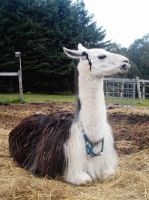 Sure I have my halter on...... by specialoftheweek