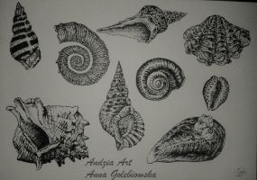 Shells by Anna655