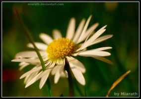 My Name Is Not Daisy ... by Miarath