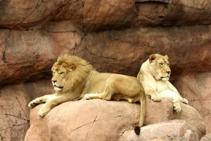 Lions 1580 by maddog1138